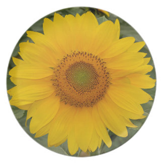 Cute Bright Yellow Sunflower Party Plate