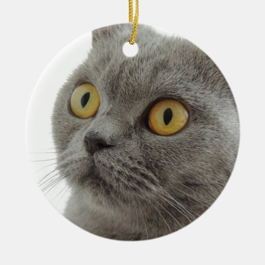 Cute British Shorthair cat Christmas Ornament