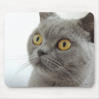 Cute British Shorthair cat Mouse Mat