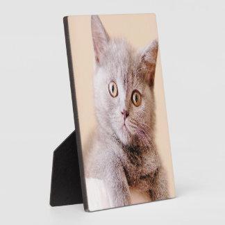 Cute British Shorthair Cat Photo Plaques