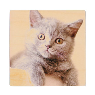 Cute British Shorthair Cat Wood Coaster