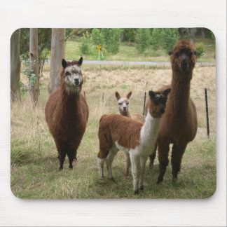 Cute Brown Alpacas In The Zoo Mouse Mat