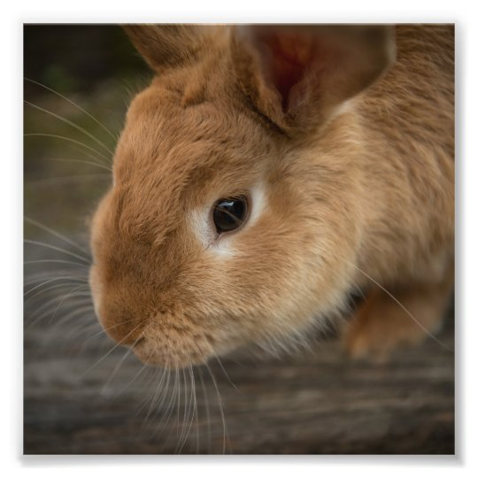 Cute brown bunny photo print