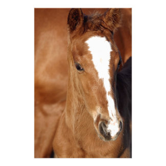 Cute brown foal stationery