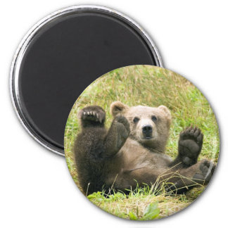 Cute brown grizzly bear cub photo, gift magnets
