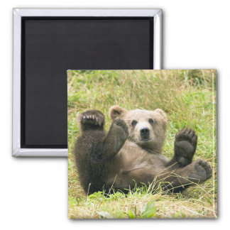 Cute brown grizzly bear cub photo, gift square magnet