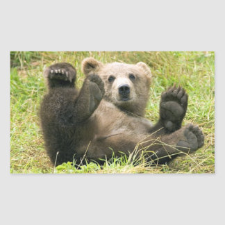 Cute brown grizzly bear cub photo, gift rectangular sticker