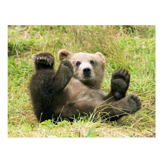Cute brown grizzly bear cub photo postcard
