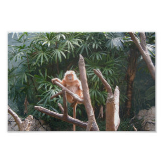 Cute Brown Monkey On The Tree Print