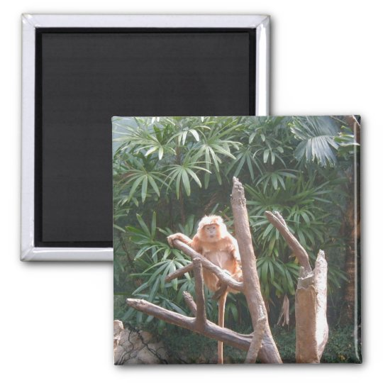 Cute Brown Monkey On The Tree Square Magnet