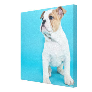 Cute Bulldog Puppy Canvas Print