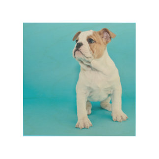 Cute Bulldog Puppy Wood Wall Art