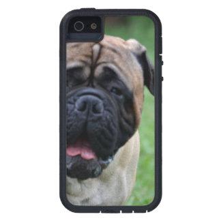 Cute Bullmastiff iPhone 5 Cover