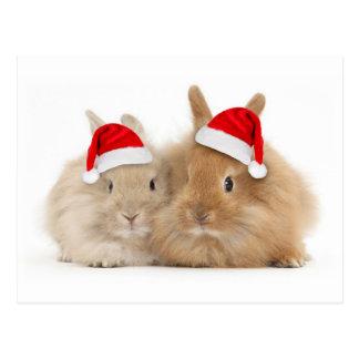 Cute Bunny Holiday Postcard