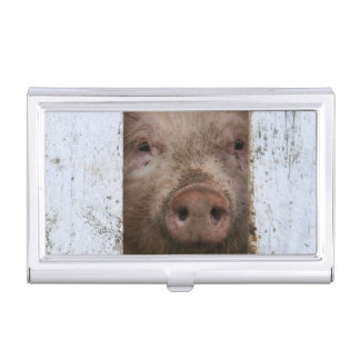Cute But Sad Looking Baby Pig Looking Through Business Card Holder