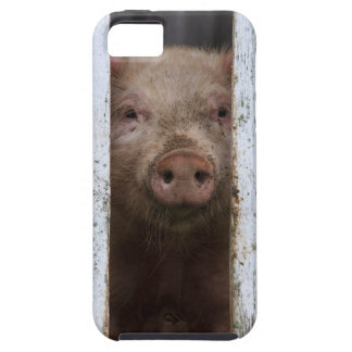 Cute But Sad Looking Baby Pig Looking Through Case For The iPhone 5
