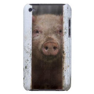Cute But Sad Looking Baby Pig Looking Through iPod Case-Mate Cases