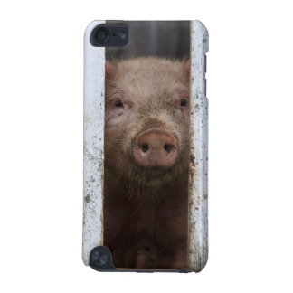 Cute But Sad Looking Baby Pig Looking Through iPod Touch 5G Cases
