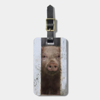 Cute But Sad Looking Baby Pig Looking Through Luggage Tag