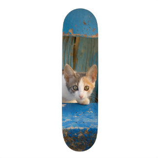 Cute Calico Cat Kitten Funny Curious Eyes Photo = 20 Cm Skateboard Deck