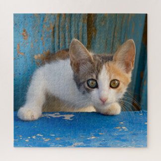 Cute Calico Cat Kitten Funny Curious Eyes Photo -- Jigsaw Puzzle