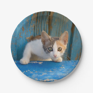 Cute Calico Cat Kitten Funny Curious Eyes Photo -- Paper Plate