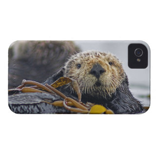 Cute California Sea Otter  Enhydra lutris iPhone 4 Cases