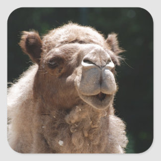 Cute Camel Square Sticker