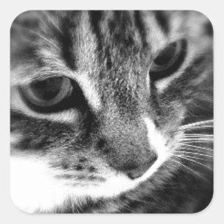 Cute Cat black and white designs Square Sticker
