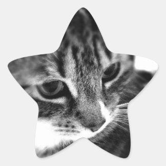 Cute Cat black and white designs Star Sticker
