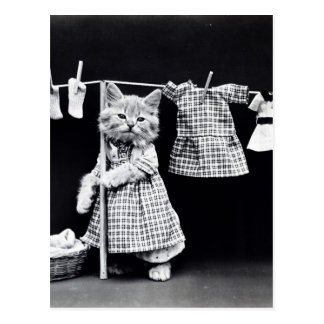Cute Cat Doing Laundry in Clothes Vintage Print Postcard