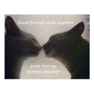 Cute Cat Friend Post Card