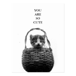 Cute Cat in a Basket Vintage Photo Postcard