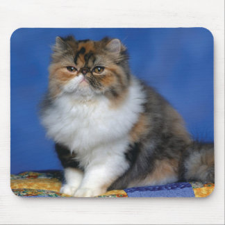 Cute Cat Kitten M003 Mouse Mat