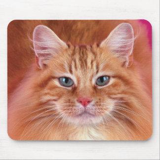 Cute Cat Kitten M007 Mouse Pad