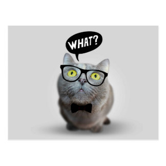 Cute Cat kitten with glasses what quote print Postcard