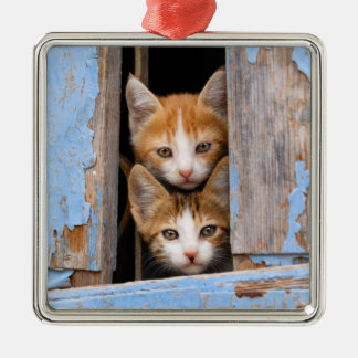 Cute Cat Kittens in a Blue Vintage Window - Decor Christmas Ornament