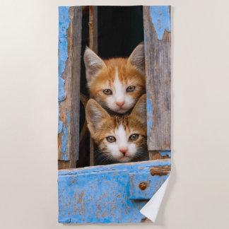 Cute Cat Kittens in a Blue Vintage Window Photo , Beach Towel