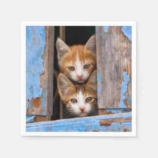 Cute Cat Kittens in a Blue Vintage Window Photo / Disposable Napkin
