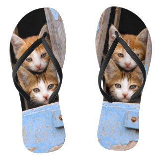 Cute Cat Kittens in a Blue Vintage Window Photo  - Flip Flops