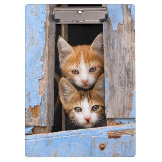 Cute Cat Kittens in a Blue Vintage Window Photo on Clipboard