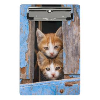 Cute Cat Kittens in a Blue Vintage Window Photo on Mini Clipboard