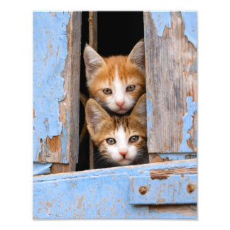 Cute Cat Kittens in Blue Vintage Window Paperprint Photograph