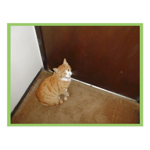 Cute Cat Near The Door On The Carpet Postcards