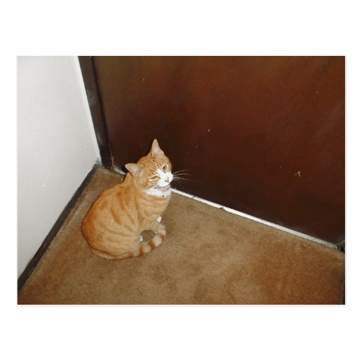 Cute Cat Near The Door On The Carpet Post Card