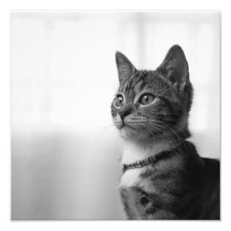 Cute Cat Photo Art