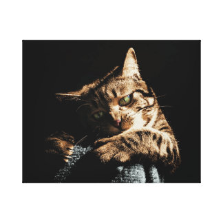 Cute cat playing Canvas Canvas Print