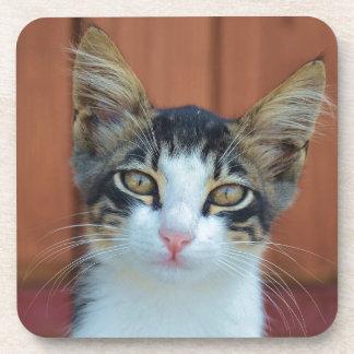 Cute cat portrait coaster