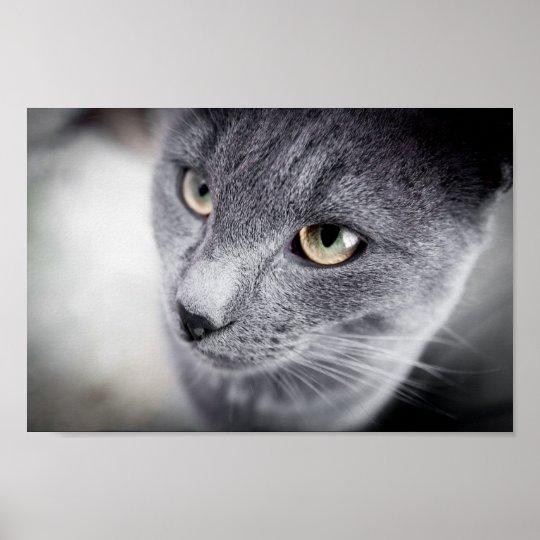 Cute cat poster