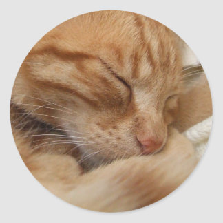 Cute Cat Stickers